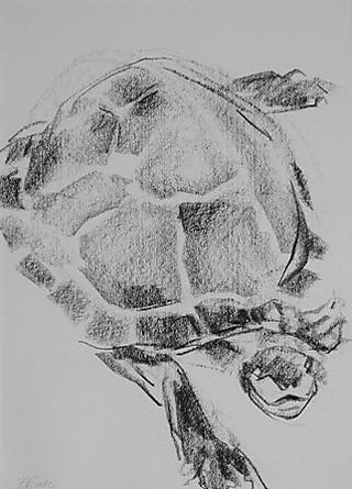 Barbara_Fugate_turtle