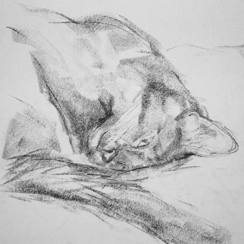 Barbara Fugate2010 Cat Portrait5