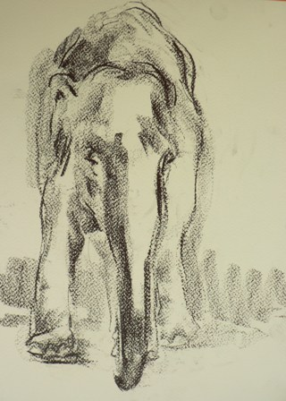 Barbara_Fugate_2012_ZooDrawing1