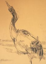 Barbara_Fugate_2012_ZooDrawing4