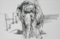 Barbara_fugate_elephant_facing