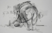 Barbara_fugate_elephant_with_ball